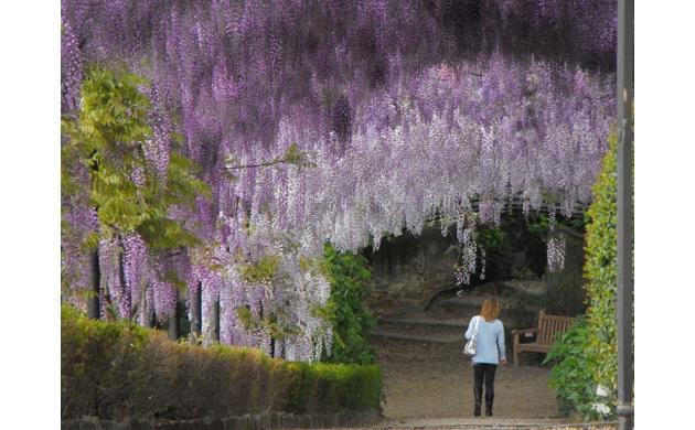 gardens-museum-views-villa-bardini